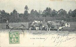 ETRANGER 22 - CPA Original  Suisse à La Charrue  Boeuf Attelage     Voir Scan Recto Verso - GE Genève