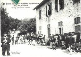 Carte POSTALE Ancienne De  SIGNES - Tirs De Combat De L'Infanterie Coloniale à CHIBRON, Chevaux D'Officiers - Signes