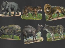 6 Découpis LOUP HYENNE DROMADAIRE ELEPHANT LION LEOPARD  Décollé D'un Album 6.5 X 5.5 CM 117 - Dieren