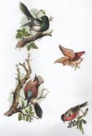 4 Découpis Oiseaux Rapace Dos Vierge 130 - Dieren