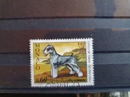 Monaco 1973  Yt  963  Expo Canine  Oblitere(jv) - Used Stamps