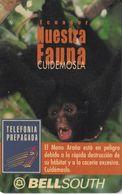 TARJETA DE ECUADOR DE UN MONO ARAÑA  (MONKEY-MONO) - Zonder Classificatie