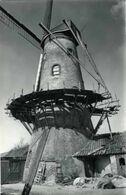 RUISELEDE (W.Vl.) - Molen/moulin/mill - De Kruiswege- Of Hostensmolen In Verval (1989), Gerestaureerd In 1999 - Ruiselede