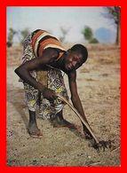 CPSM/gf MORA (Cameroun). Chez Les Montagnards, Les Semailles Du Mil...L443 - Cameroun