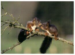 (K 2) Zoo Animals - Squirrel - Animales