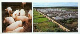 #23   Pig Farm 'Zelenetsky' Of Syktyvkar, Komi Republic - Arctic RUSSIA - Big Size Postcard 1984 - Farmers