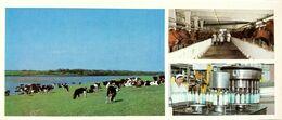 #23   Dairy  'Lozymski' Of Syktyvkar, Komi Republic - Arctic RUSSIA - Big Size Postcard 1984 - Farmers