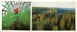 #23  Greenhouse Forestry In Komi Republic, Cultivation Trees - Arctic RUSSIA - Big Size Postcard 1984 - Cultivation