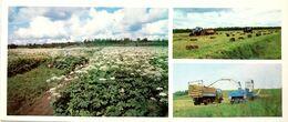 #23  Agriculture In Komi Republic - Arctic RUSSIA - Big Size Postcard 1984 - Cultivation