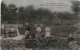40 Landes. L'industrie Landaise. Recolte De La Graine De Pignes En Forêt - Ohne Zuordnung