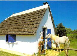 EN CAMARGUE Gardian Et Son Cheval ( Beau Plan Cheval Blanc Costume Cabane Gardian ) - Other Municipalities