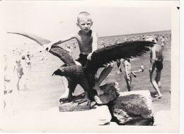Cute Kid Boy Beach On Eagle Statue Odd Children Garçon Old Photo Snapshot Swimsuit #2 - Anonymous Persons