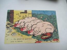 Cochon Cochons On Attend Le 4 Eme Pour La Belotte - Maiali