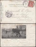 France 1905 - Courriers Convoyeurs- Carte Postale De Halluin-Tourcoing à Destination Tourcoing.. (VG) DC-9026 - Railway Post