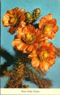 Terra Cotta Cactus In Bloom - Sukkulenten
