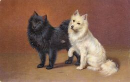 Chien  Pomeranian Spitz.  Hunde  Cani Old Dog Cpa. Postcard  1907 - Perros