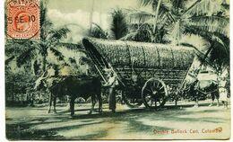 4586 -  - SRI  LANKA ( Ceylon)  - COLOMBO  :  Double  Bullock Cart  , Attelage , Transport , Métier... CIRCULEE 1910 - Sri Lanka (Ceylon)