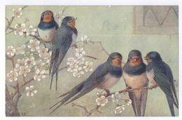 A.L. West - Vögel - Trucks Post Card Carte Postale - Uccelli