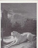 Maintenant Qu'il Repose Que Va-t-il M'arriver ? ( Edité Par La Ligue Française Contre La Vivisection ) - Dogs