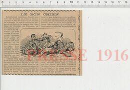 Presse 1916 Chien Sanitaire Guerre Sauveteur Berger De Brie Beauce Flandres Limousin Gascogne Soldat Du Mans 231K - Non Classificati