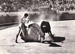 "DOMAINE DE MEJANES/ARLES CORRIDA ""LA VERONIQUE"" (dil469) - Bull"