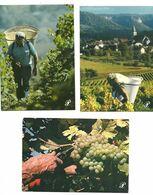 """Lot 17 CPM Prestige""""  Les Vendanges En France"""" - Vines"""