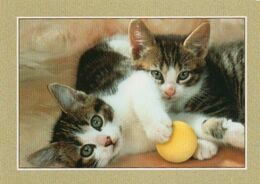 4 Cartes  Collection  Fotoline - Gatos
