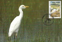 CARTE MAXIMUM - MAXIMUM CARD - MAXICARD - MAXIMUM KARTE - CAP VERTE / CAPE VERDE - OISEAUX - HÉRON - Bulbucus Ibis - Storks & Long-legged Wading Birds