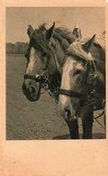 DC3140 - Horse Pferd Pferde - Chevaux