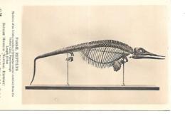 FOSSIL REPTILES BRITISH MUSEUM - Museen