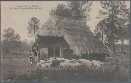 Dans Les Landes , Un Parc à Moutons Dans La Forêt , Animée - Francia
