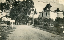 Saint Aygulf - Café De La Gare - L'avenue Des Eucalyptus - Saint-Aygulf