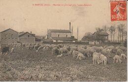EURE SAINT MARCEL MOUTONS AU PATURAGE PRES L'USINE D'ENGRAIS  ETAT VERSO - Francia