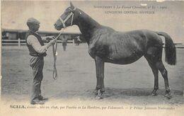CHEVAUX- SUPPLEMENT A LA FRANCE CHEVALINE-SCALA-CONCOURS CENTRAL HIPPIQUE 1909 - Caballos