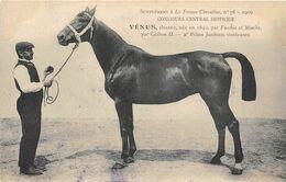 CHEVAUX- SUPPLEMENT A LA FRANCE CHEVALINE-VENUS-CONCOURS CENTRAL HIPPIQUE 1909 - Caballos