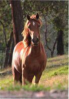 Standing Horse - Cavalli