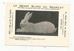 Cp,publicité ,  Lapin De Rapport , LE GEANT BLANC DU BOUSCAT ,créé En 1906 Par Mme Paul Dulon , écrite - Werbepostkarten