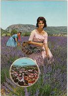 Hautes Alpes : LARAGNE : Carte Parfumée Vallazur - Grasse : Parfum Lavande De Fragonard - France