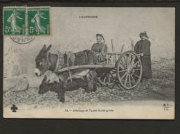 Animal Tier / Ane / L'Auvergne / Attelage Et Types Auvergnats - Ezels