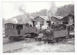 CPM VOIR DOS 19 TULLE Train Locomotives Vapeur Et Autorails Au Dépôt Le 11/08/1959 - Tulle