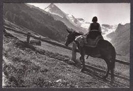 110417/ EVOLENE, La Forclaz, En Route Pour Les Mayens - VS Valais