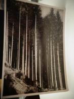 Cartolina Vetrilolo Terme Frazione Di Levico Prov Trento La Foresta - Trento