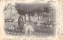 C P A PATRE ET CHIEN  Des Pyrénées - éditeur D.T. Lourdes BERGER - Breeding
