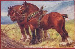 Illustrator Illustrateur Paard Pferd Horse Horses Cheval Chevaux Clydesdale Trekpaard CPA Old Postcard Raphael Tuck Nr. - 1900-1949