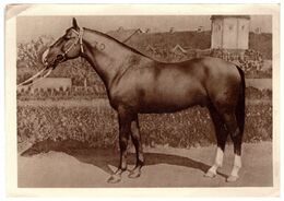 Champion Draft Horse Zhasmin Russia CCCP -1940. - Paarden