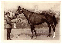Champion Draft Horse Istoria Russia CCCP -1940. - Paarden