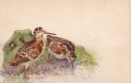 Jagd Chasse, Hunting. Becasse  Woodcock Houtsnip. Geflügel  Old Cpa. Ca. 1900 - Caccia