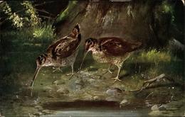 Artiste Cp Zwei Schnepfen, Scolopacidae - Animaux & Faune