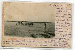 44 ST SAINT BREVIN L'OCEAN La Peche Des Moules Attelage Quatre Boeufs En Mer  1903 Timb No FA 5237 ,Santerr  D14 2020 - Saint-Brevin-l'Océan