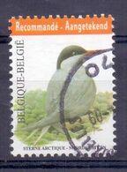 Belgie - 2013 - OBP - 4306 - Noorse Stern - Vogels - A.Buzin - Gestempeld - 1985-.. Vögel (Buzin)